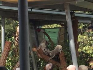 20170413 Tauranga Zoo 1