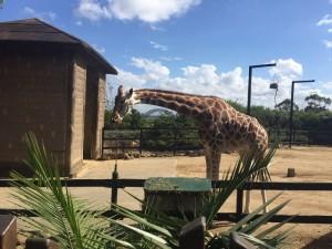 20170413 Tauranga Zoo 4